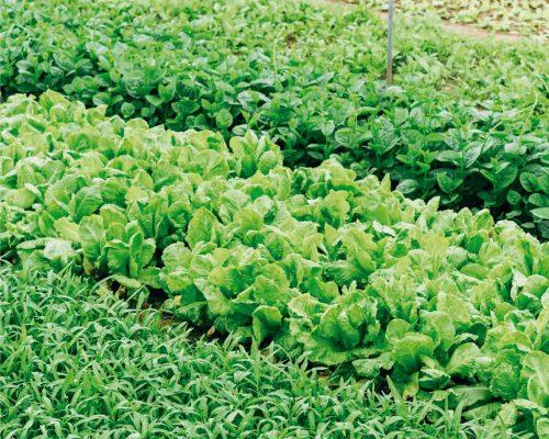 fertilizantes2